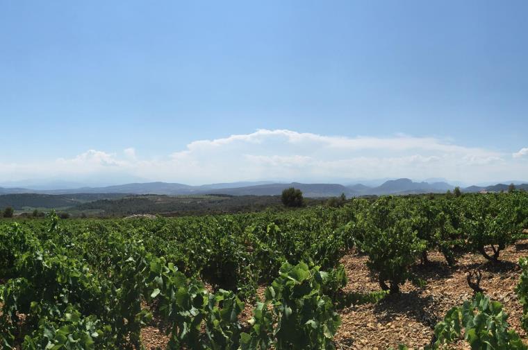 Vignerons de Tautavel Vingrau 2 vigneronstautavelvingrau