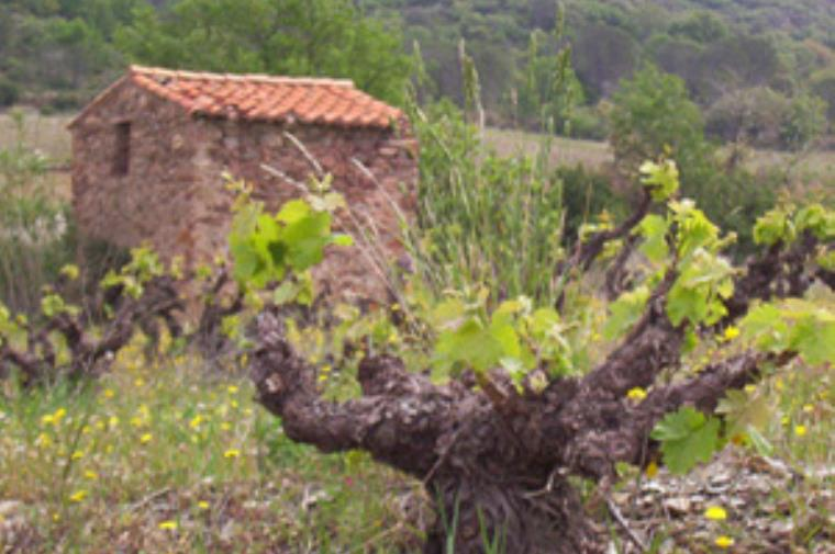Domaine Deveza Domaine Deveza