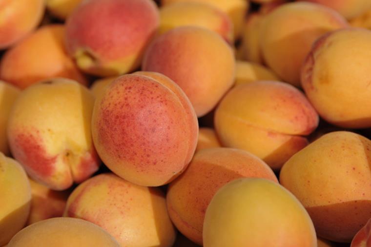 marché Espira Abricots du roussillon Guy Banyuls