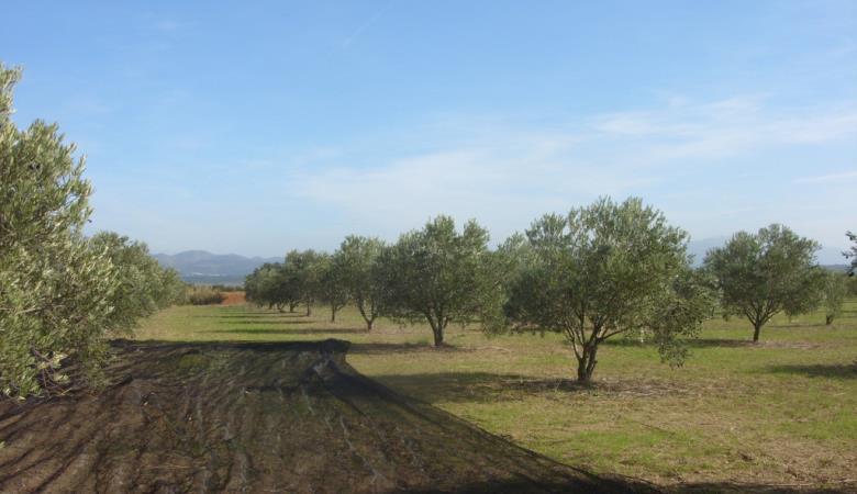 Domaine oleicole du Mas Boutet 7