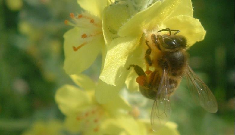 Saveurs de miel